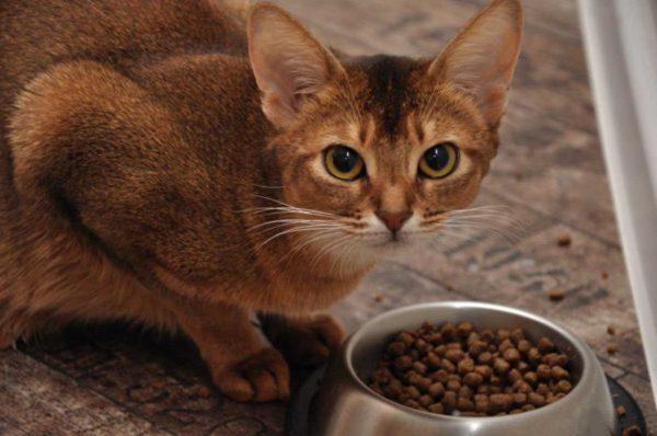 ТОП-5 кормов для кошек супер премиум класса
