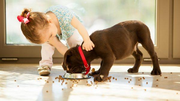 Какой корм для собак качественный?