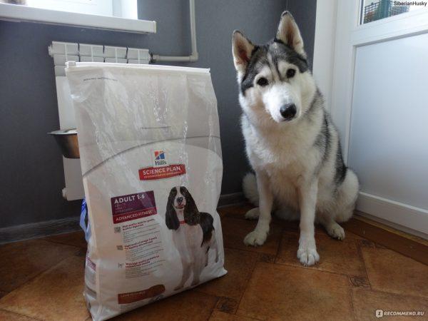 Из чего делают премиум корма для собак и как их выбрать?